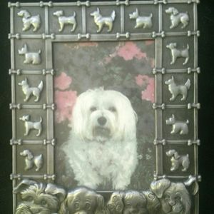 5 x 7 Pet photo frame